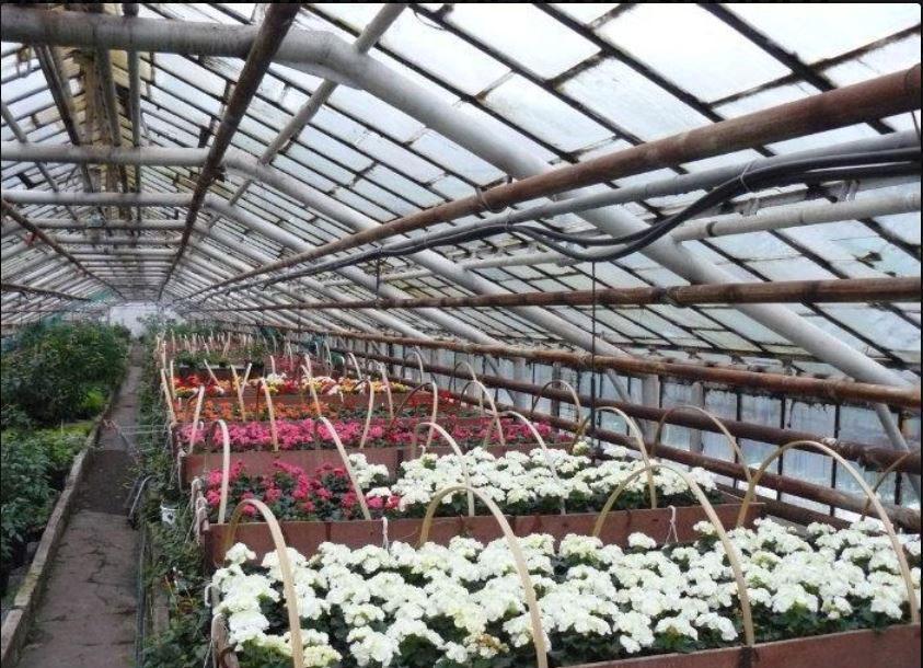 Мытищинский совхоз декоративного садоводства